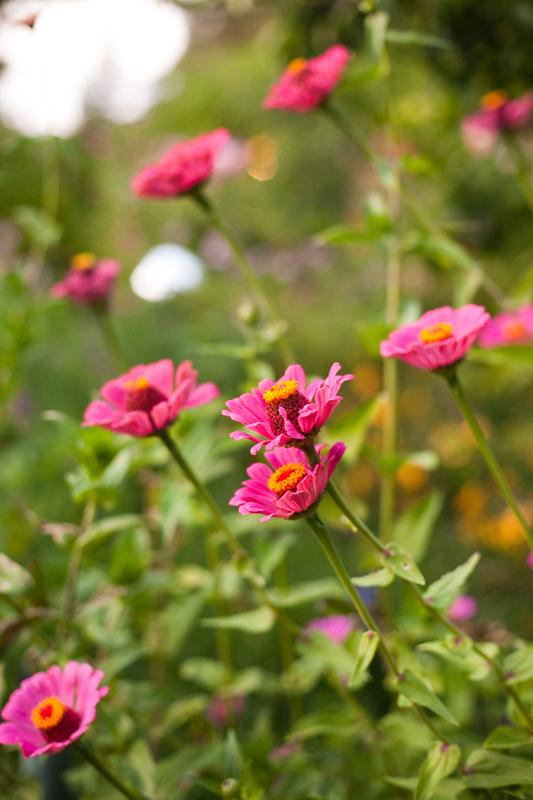Kier and Will, Healdsburg Country Gardens, ©Jessamyn Harris (7)